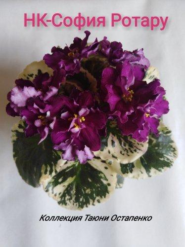 Медуница фото растения и описание российская актриса
